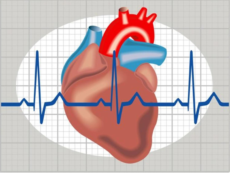 hogyan kell inni fűzfakérget magas vérnyomás esetén