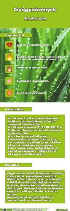 Naturszertár - Tudástár (gyógytea, gyógyteák, gyógynövények webáruháza)