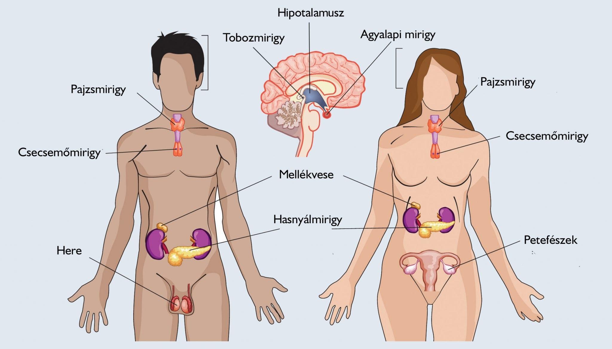 endokrin betegségek és magas vérnyomás forró lábfürdők magas vérnyomás ellen
