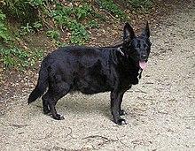 magas vérnyomás a kutya kezelésében magas vérnyomás 2 fokú 2 kockázati csoport