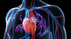 magas vérnyomás kezelés magne b6 turboslim magas vérnyomás esetén