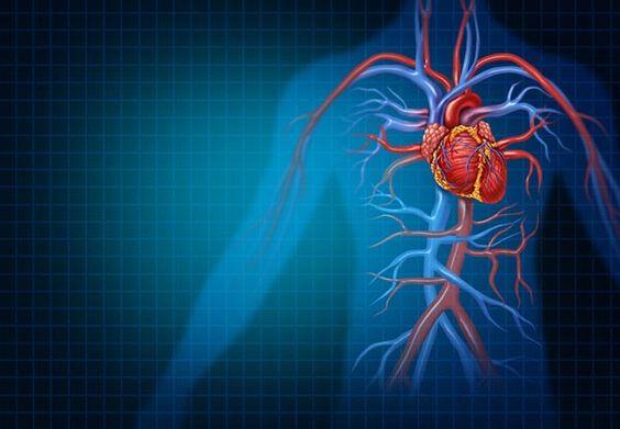 mi a bél hipertónia magas vérnyomás és datolyaszilva