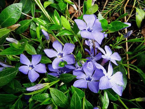 beltéri virág magas vérnyomás ellen