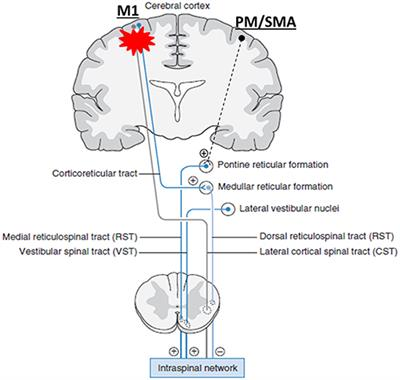 cortexin hipertónia a magas vérnyomás kockázatának diagnosztizálása