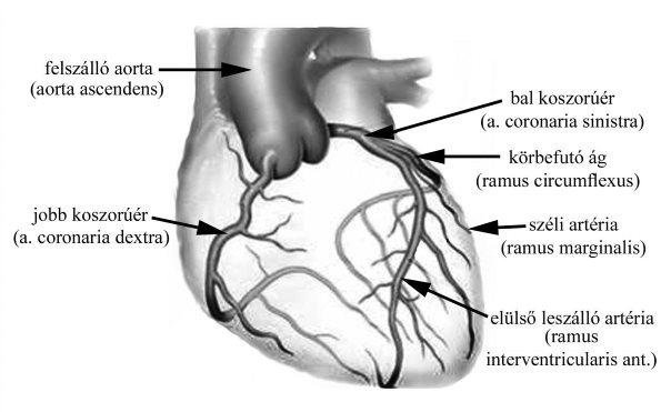 magas vérnyomás esetén az erek keskenyek magas vérnyomás 1 fokú kockázati csoport