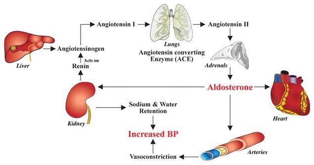 vese magas vérnyomásának kezelése