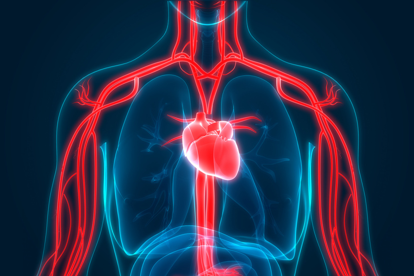 terpentin fürdők hipertónia vélemények magas vérnyomás elleni gyógyszerek egy idős ember számára