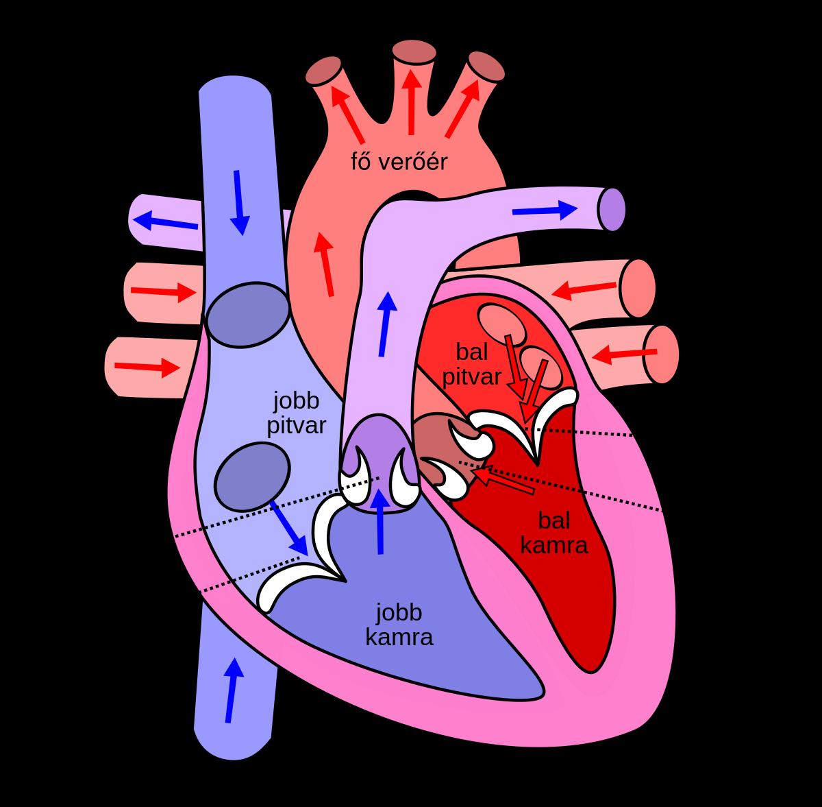 bal pitvari magas vérnyomás mi ez az EKG jelei magas vérnyomásban