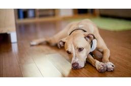 a kutya magas vérnyomásban szenved hogyan kell kezelni az idősebb emberek magas vérnyomását