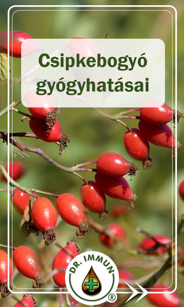 Csipkebogyó gyógyhatásai | Health , Herbs, Healthy life