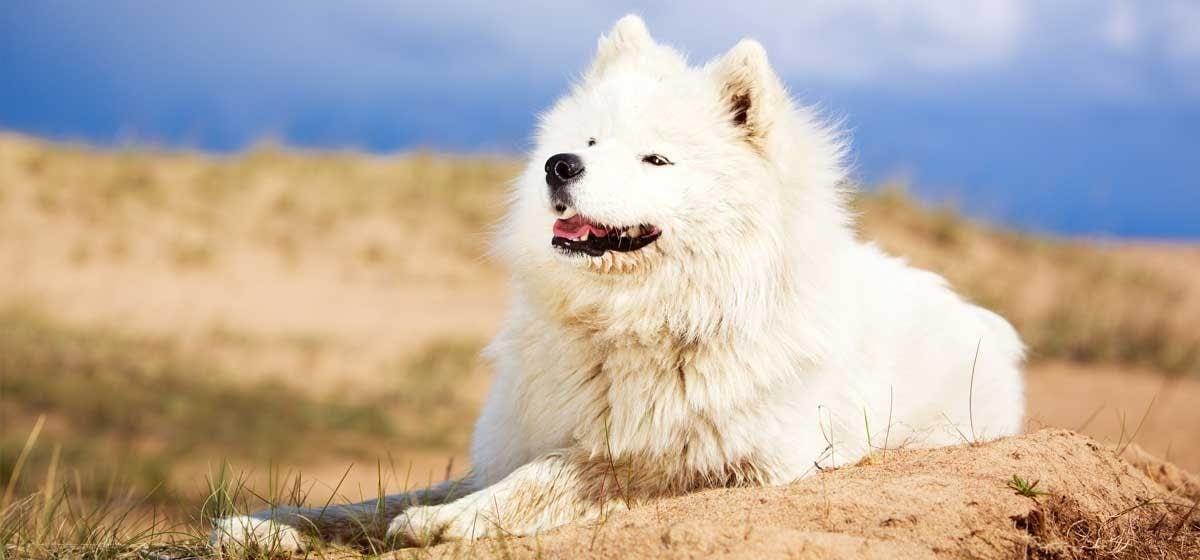 magas vérnyomás a kutya kezelésében mi a leghatékonyabb gyógyszer a magas vérnyomás ellen