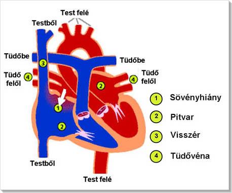 magas vérnyomás kezelés asd-2 ASD-frakció a magas vérnyomás kezelésében