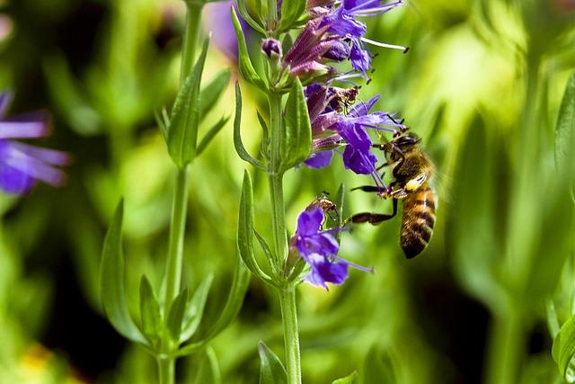 mezei méh a magas vérnyomásból magas vérnyomás és a szem angiopathiája
