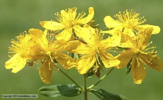 Szabadulj meg a stressztől ezekkel a gyógynövényekkel! | Well&fit