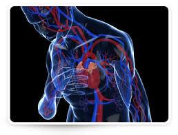 magas vérnyomás étel reggeli tól hogyan kell szedni a fagyöngyöt magas vérnyomás esetén